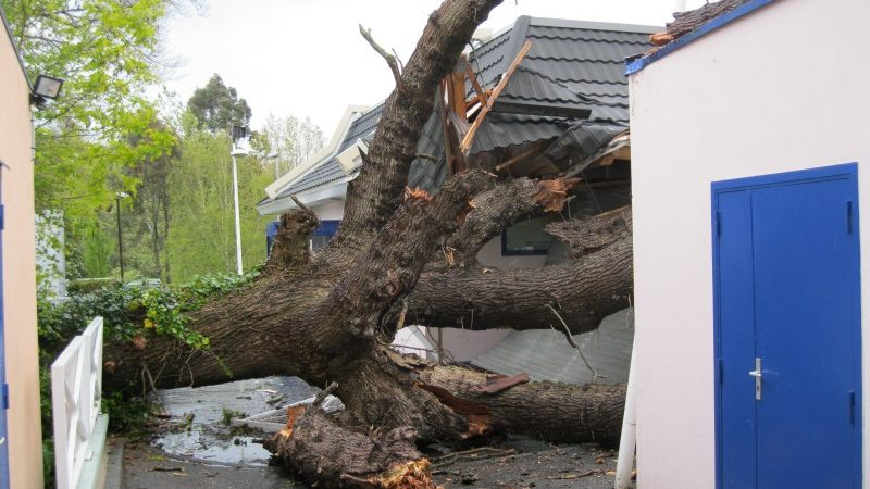 Chute d'arbre