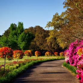Entretien de jardin : massifs, fleurs et gazon