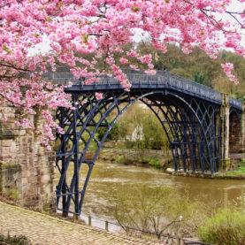 Superbe jardin japonais