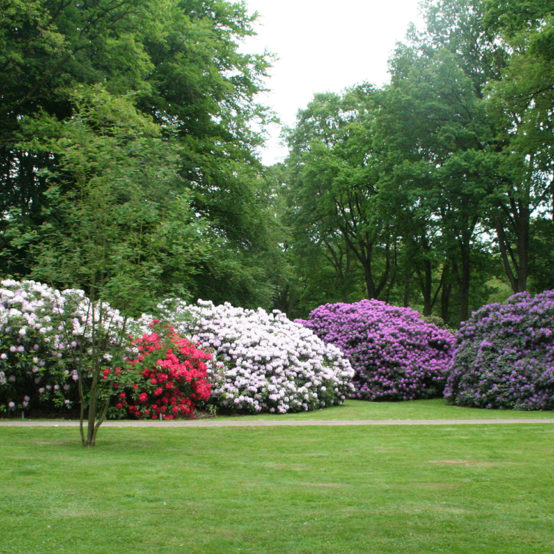 Superbes massifs de fleurs