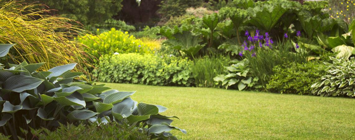 Entretien d'un jardin à la végétation luxuriante